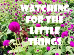 Watching for the Little Things-November 22nd