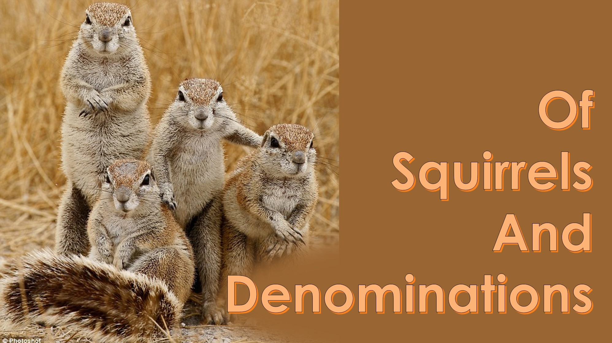 You are currently viewing Squirrels and Denominations – June 6th
